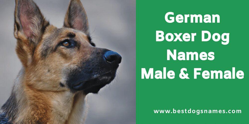 Most Popular Boxer Dog Names