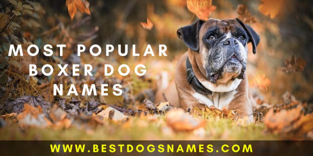 Boxer Dog Names