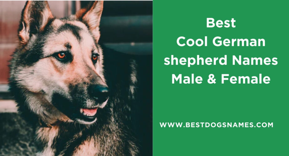 Best Cool German shepherd Names Male & Female