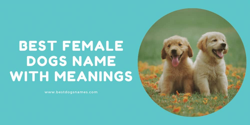 Best Female Dogs Name with Meanings