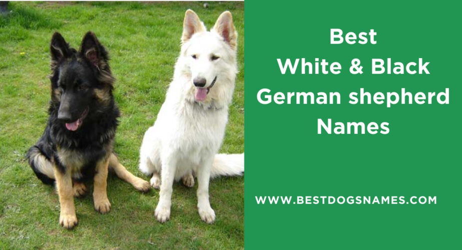 Best White & Black German shepherd Names