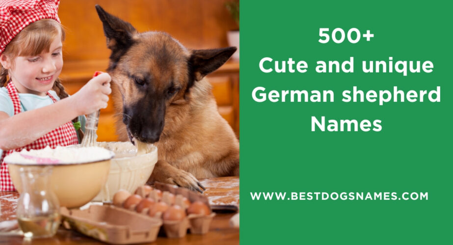 Cute and unique German shepherd Names