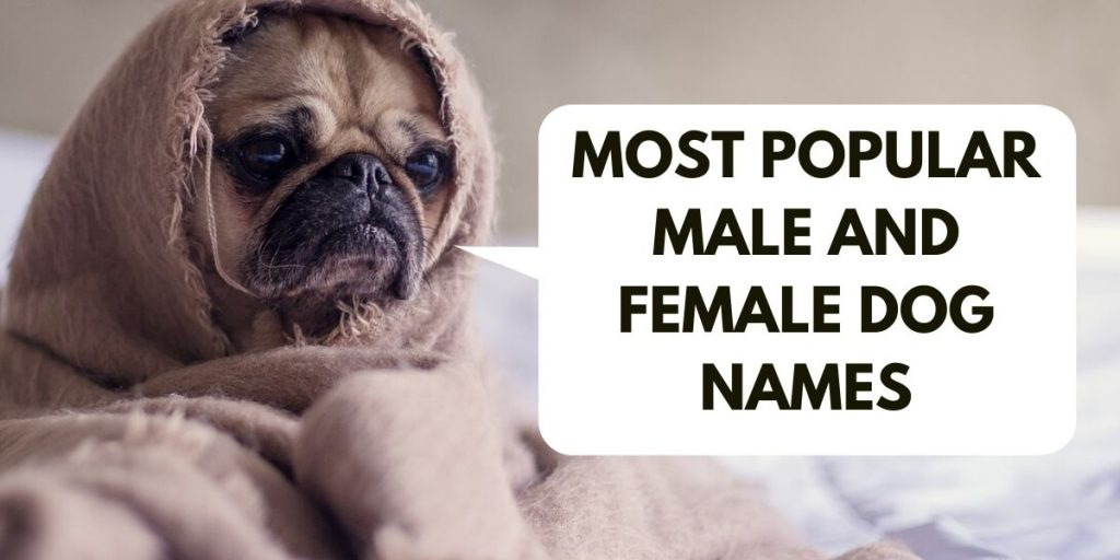 Most Popular Male And Female Dog Names