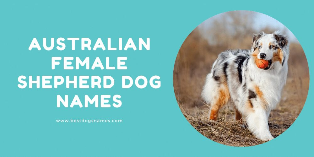Australian Female Shepherd Dog Names