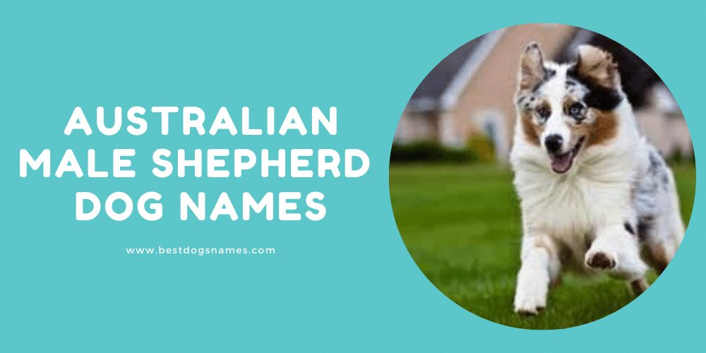 Australian Male Shepherd Dog Names