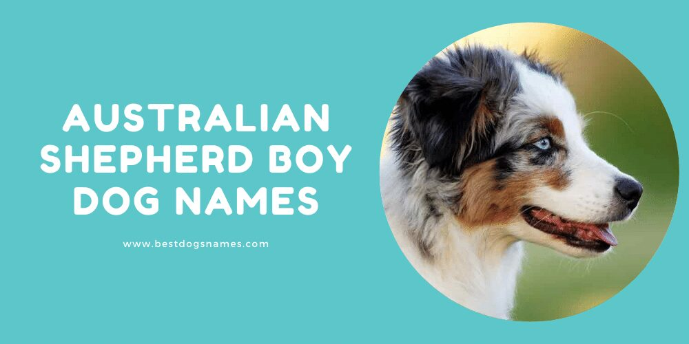 Australian Shepherd Boy Dog Name