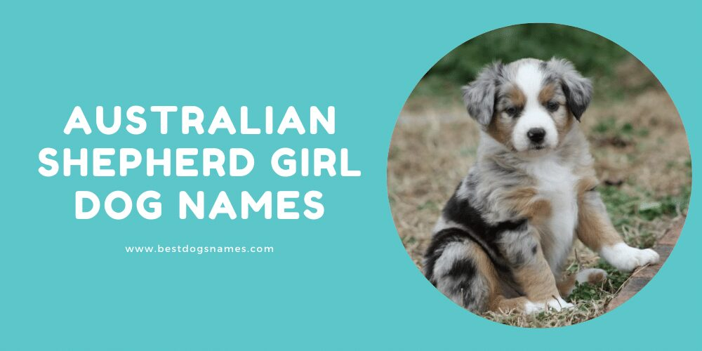 Australian Shepherd Girl Dog Names