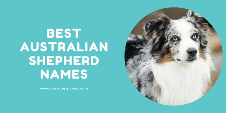 Best Australian Shepherd Names