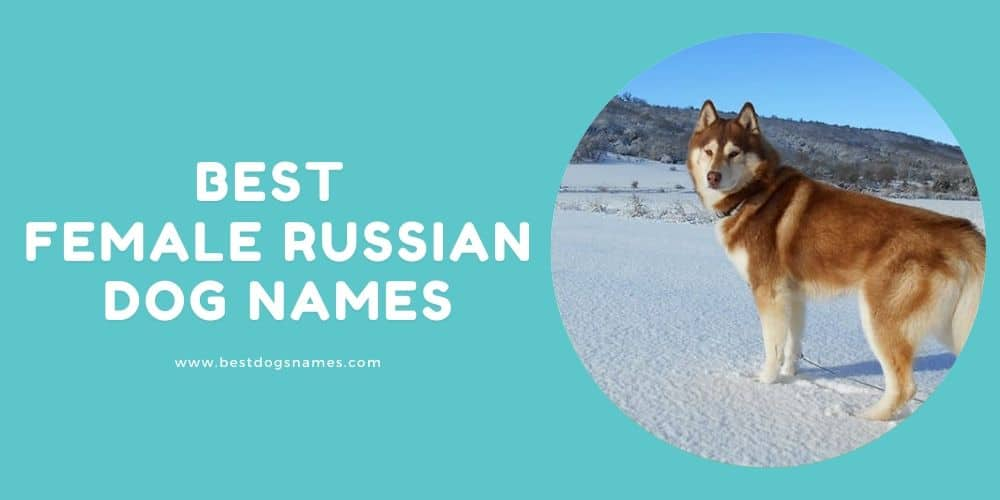 Best Female Russian Dog Names