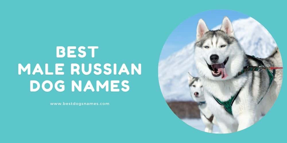 Best Male Russian Dog Names