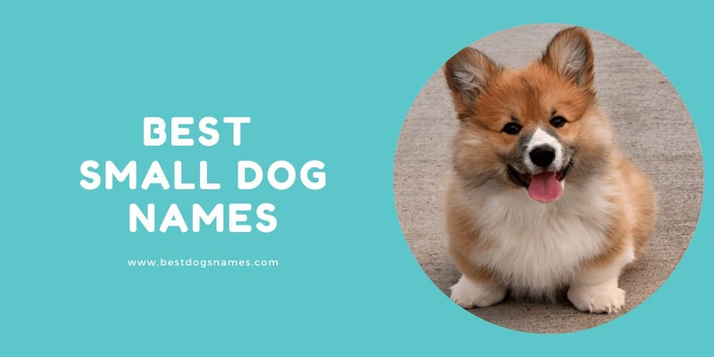 Best Small Dog Names