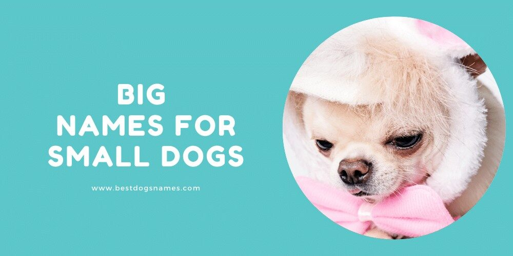 Big Names for Small Dogs