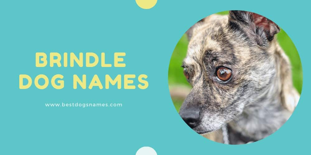 Brindle Dog Names