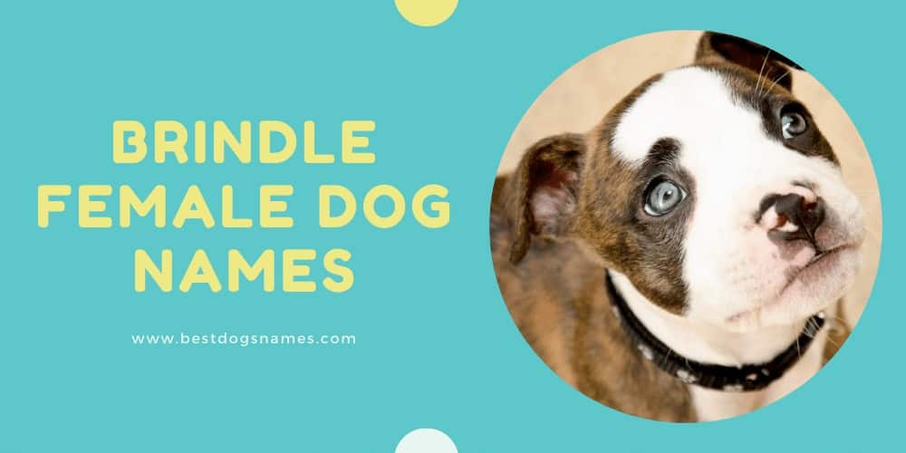 Brindle Girl Dog Names