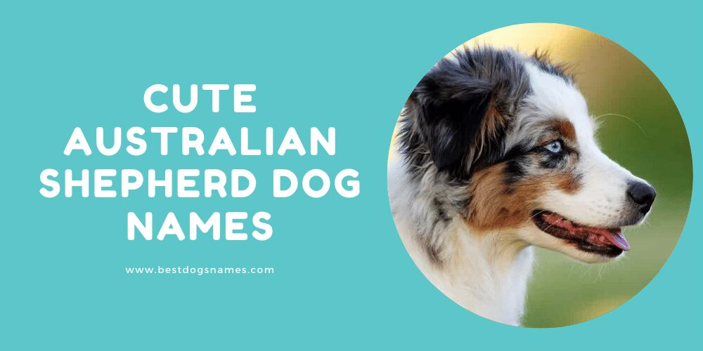 Cute Australian Shepherd Dog Names