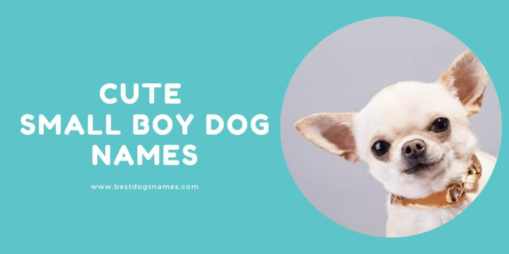 Cute Small Boy Dog Names