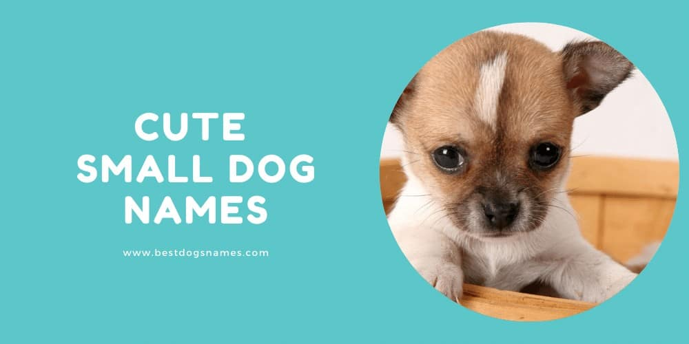 Cute Small Dog Names