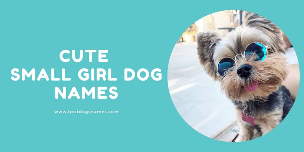 Cute Small Girl Dog Names