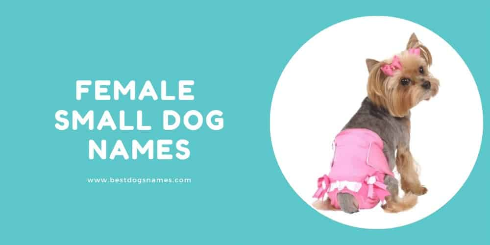 Female Small Dog Names