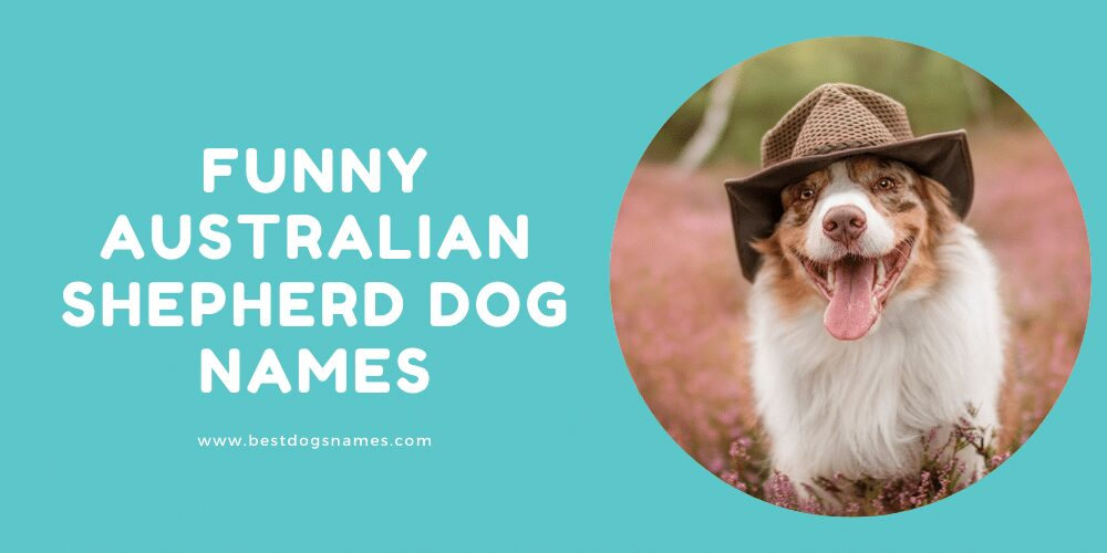 Funny Australian Shepherd Dog Names