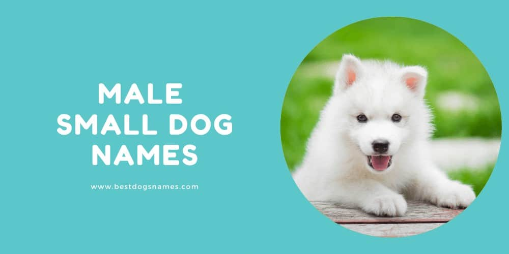 Male Small Dog Names