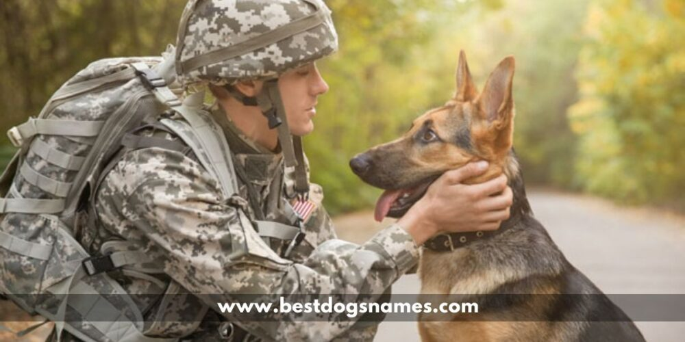 Military Dog Names