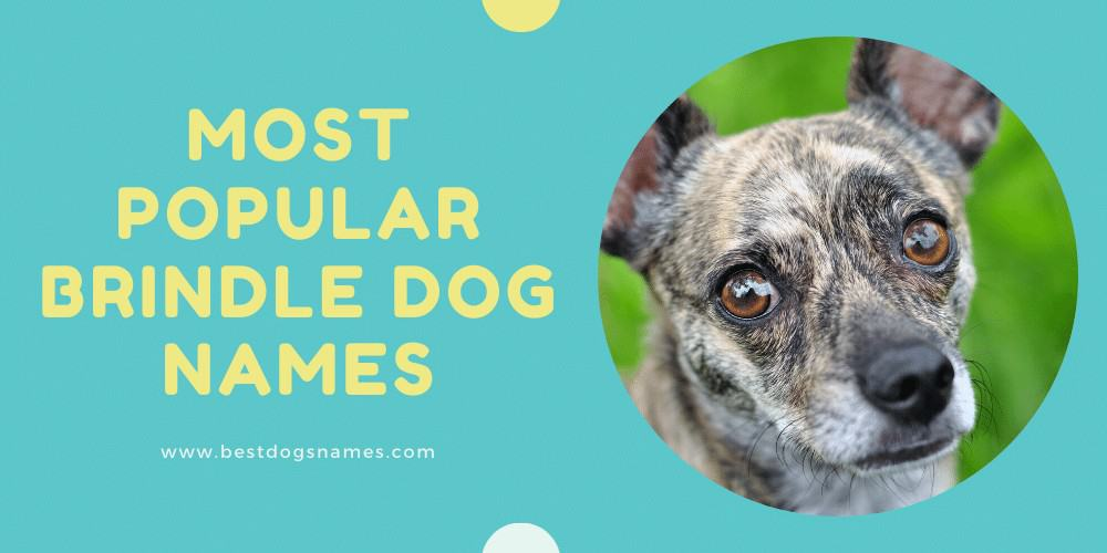 Most Popular Male and Female Brindle Dog Names