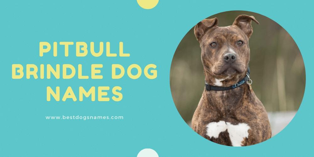 Pitbull Brindle Dog Names