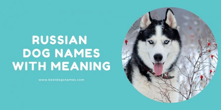 Russian Dog Names with Meaning
