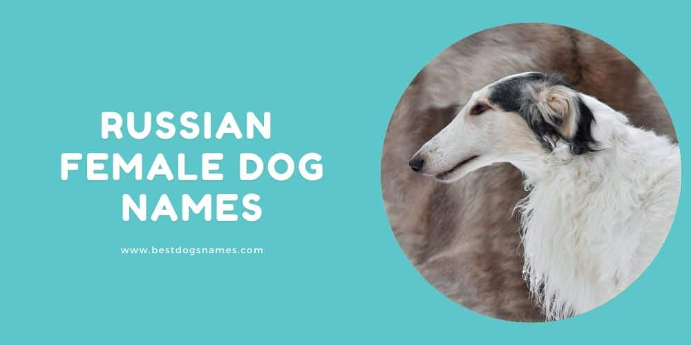 Russian Female Dog Names