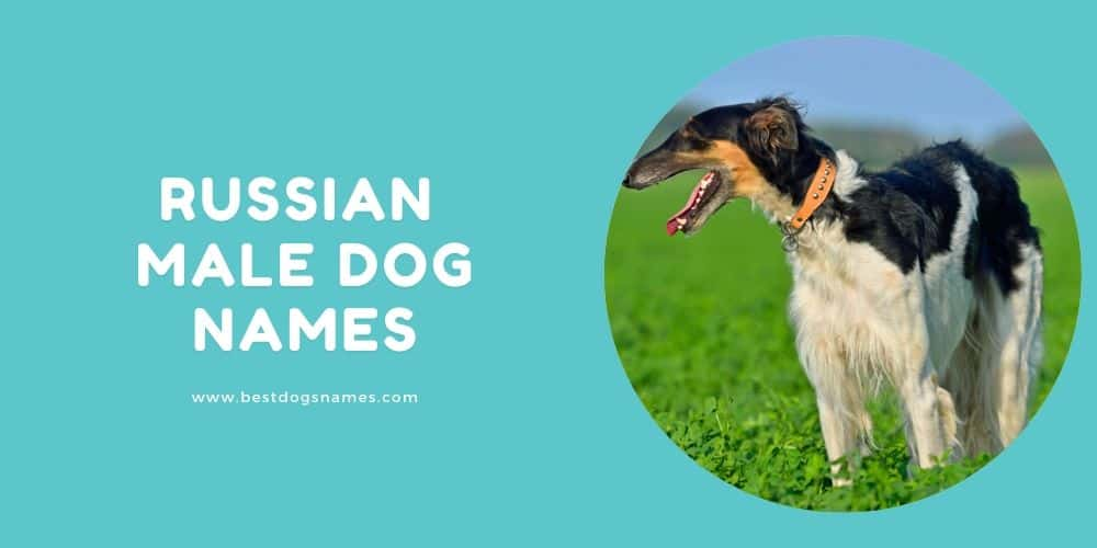 Russian Male Dog Names