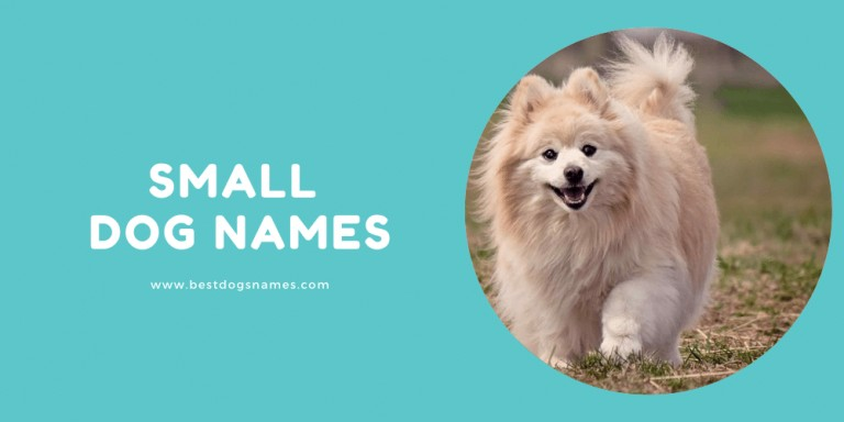 Small Dog Names