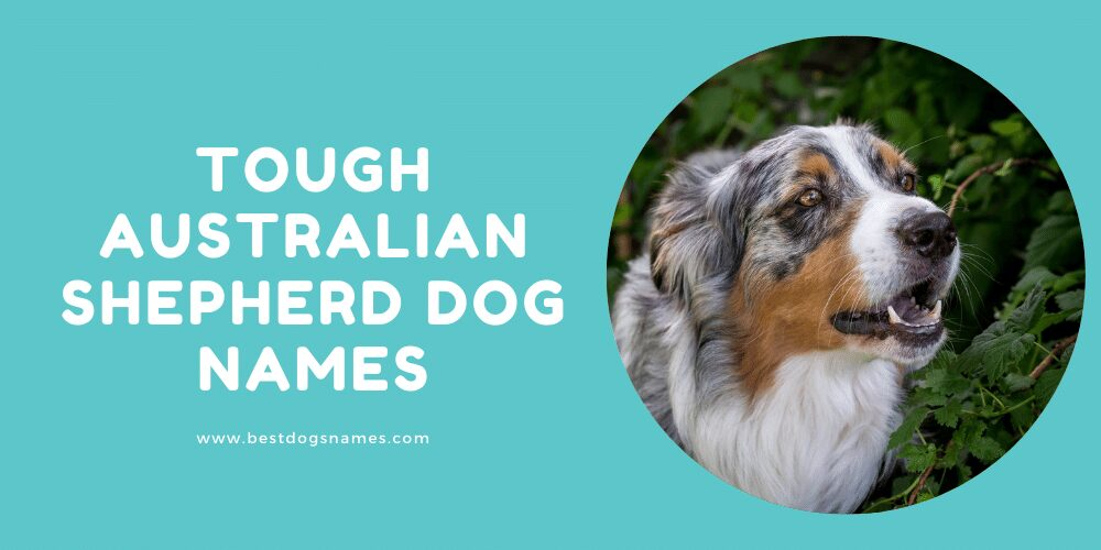 Tough Australian Shepherd Dog Names