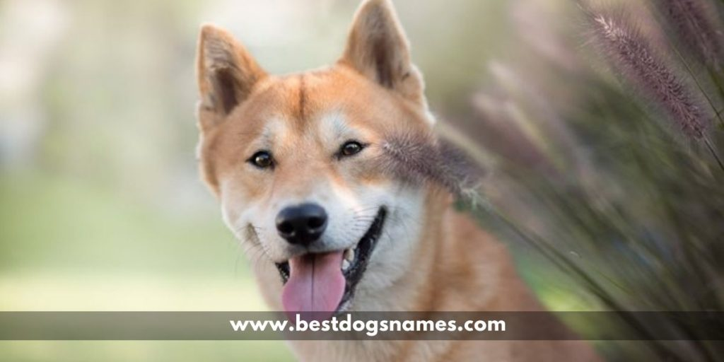 Unique Japanese Dog Names with Meanings in 2020