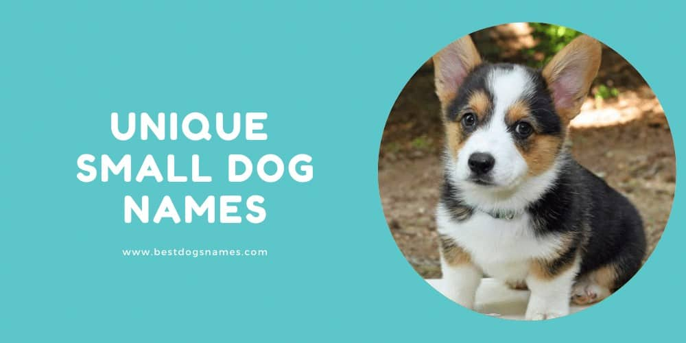 Unique Small Dog Names
