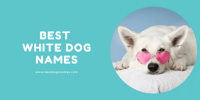 Best White Dog Names