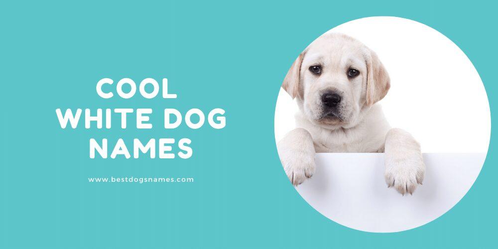 Cool White Dog Names