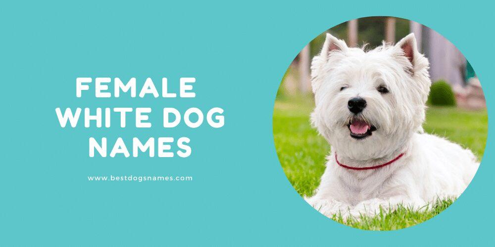 Female White Dog Names