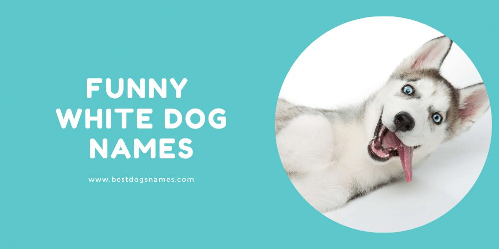 Funny White Dog Names