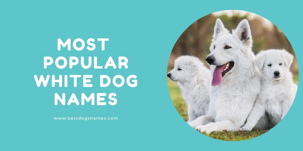 Most Popular White Dog Names