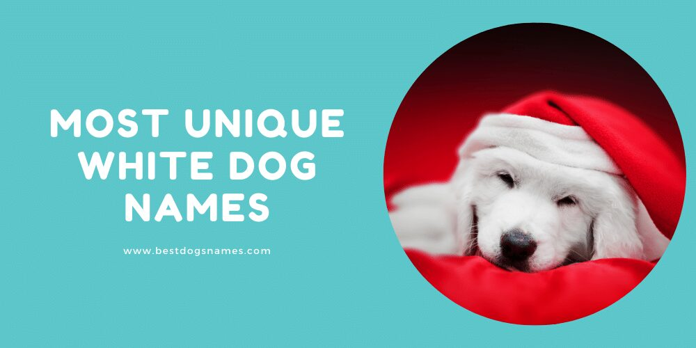 Most Unique White Dog Names