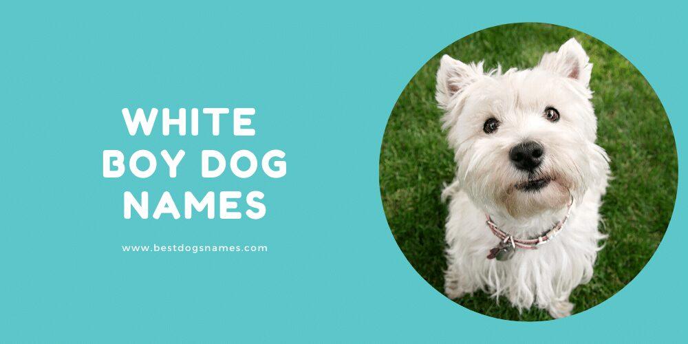 White Boy Dog Names