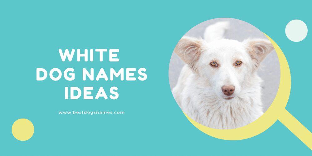 White Dog Names Ideas