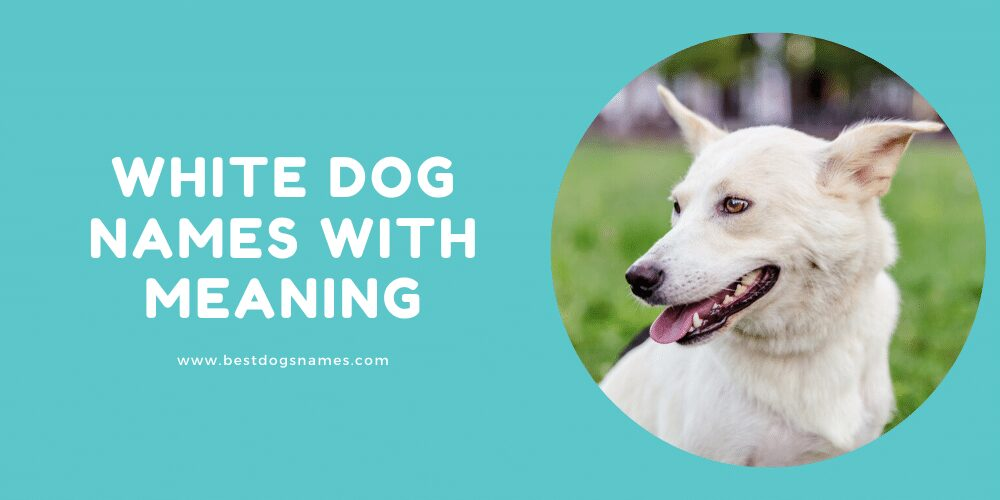 White Dog Names with Meaning