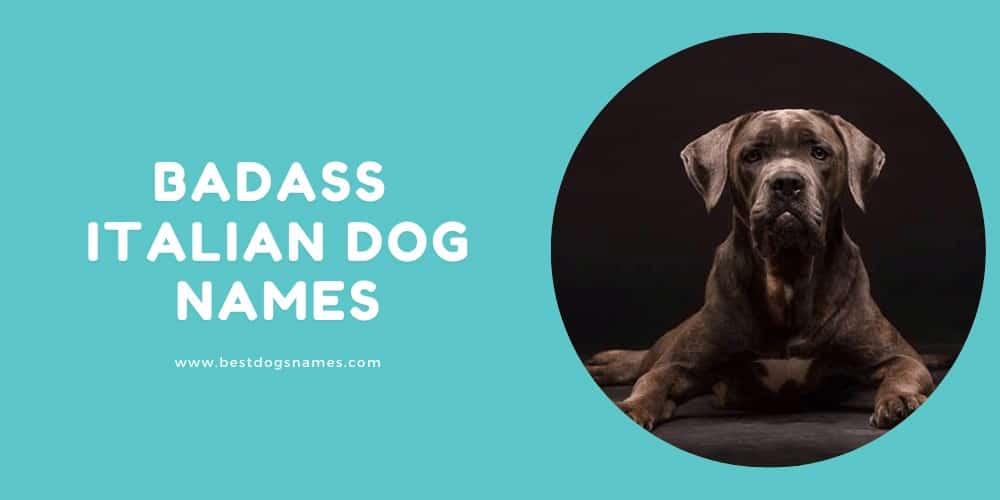 Badass Italian Dog Names