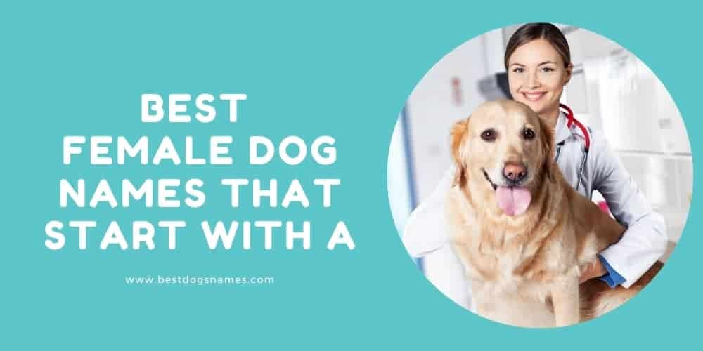 Best Female Dog Names That Start With A-min