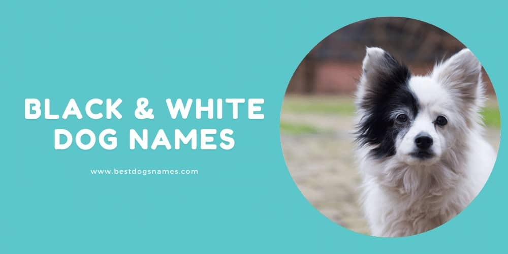 Male Black & White Dog Names