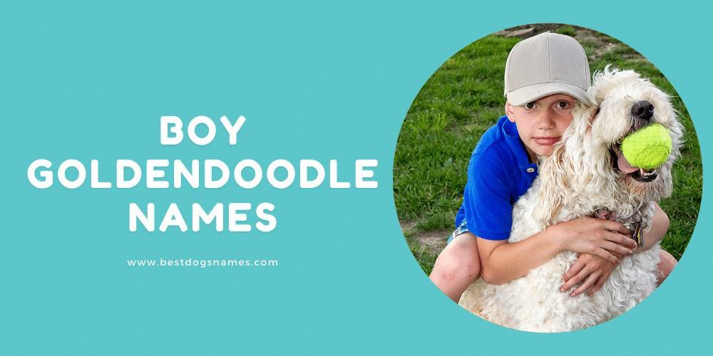 Boy Goldendoodle Names