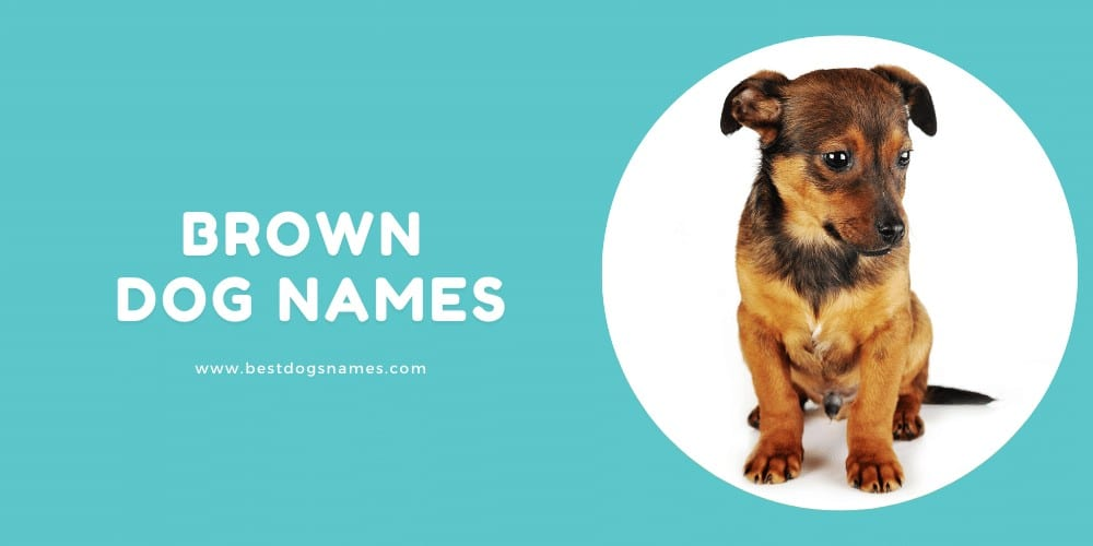 Brown Dog Names