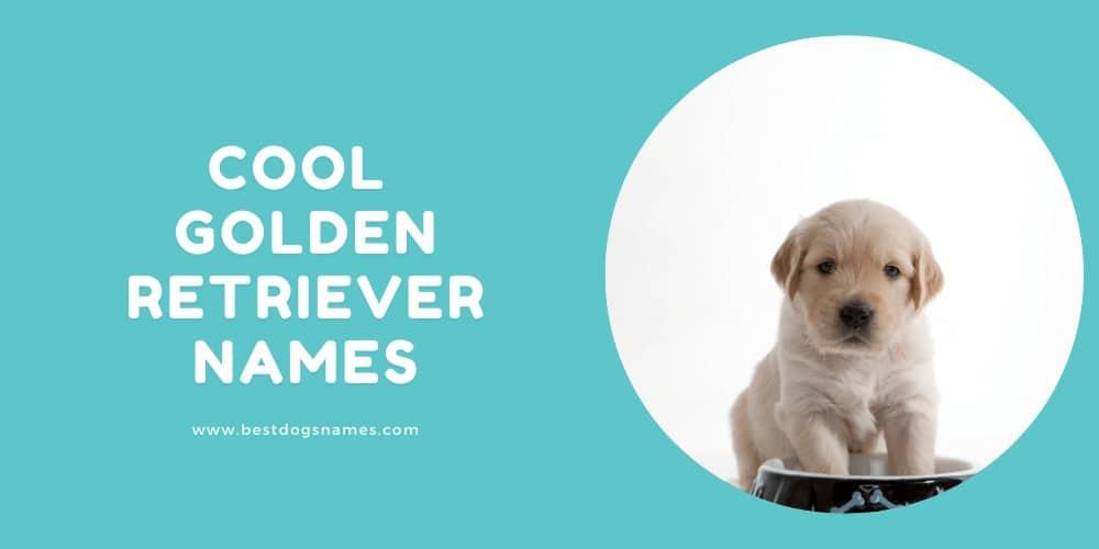 Cool Golden Retriever Names